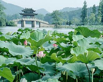 杭州西溪湿地一日游